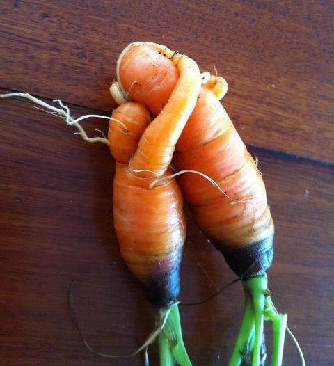 carrots kissing