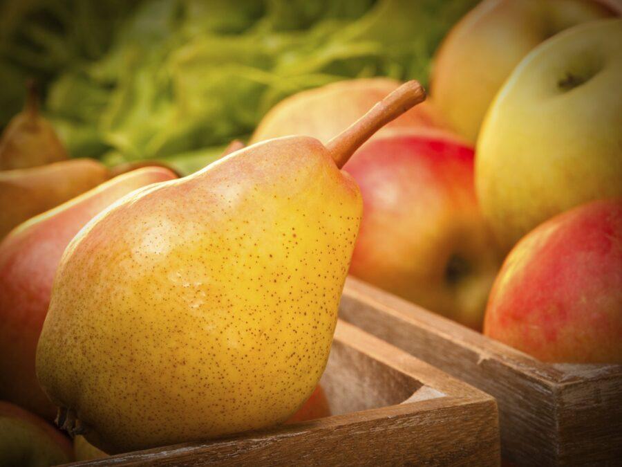 Ripe Pears