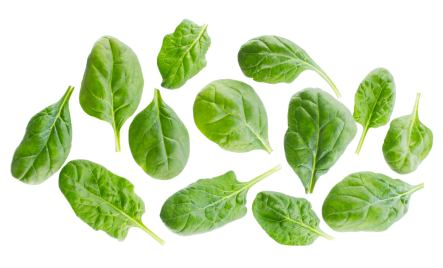 spinach leaves separated