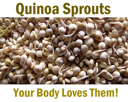 Sprouting quinoa
