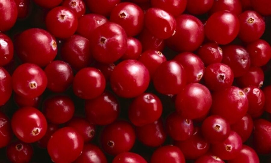 Photo of Cranberries: The Little Red Powerfood with a Big Punch
