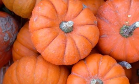 Pumpkin: The Biggest Powerfood ….Ever