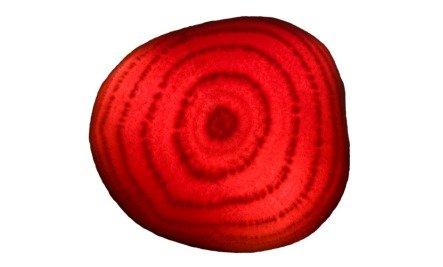 beet slice