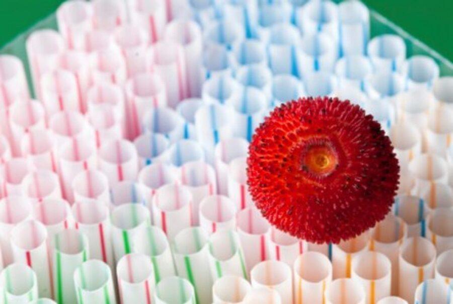 Photo of Plastics – Havoc with Your Hormones