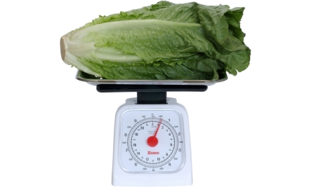 romaine lettuce nutrition far outweighs the other types of lettuce