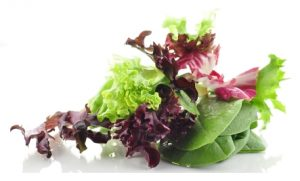 different types of lettuce and salad ingredients