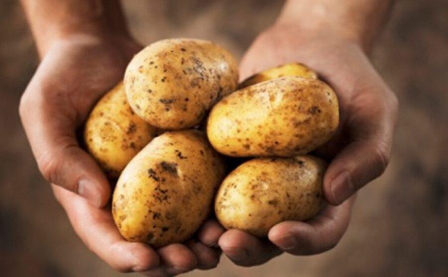 Photo of Peppy Potato