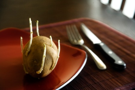 potato with sprouts