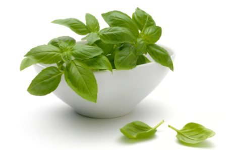 Photo of 7 Health Benefits of Basil – The Royal Herb