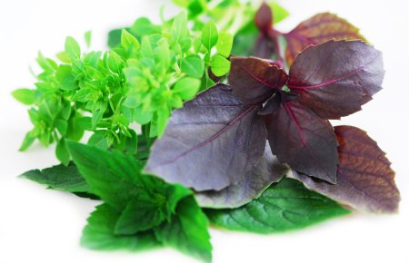 Holy Basil Benefits