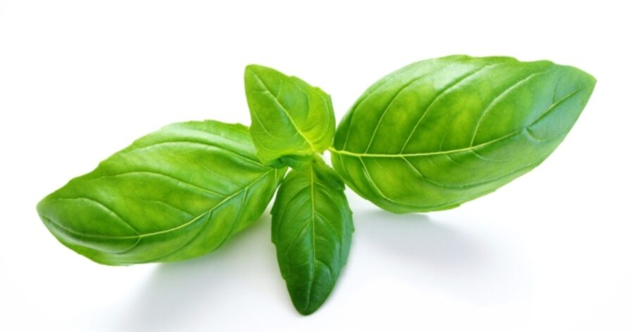 Photo of Basil Tea Is Helpful For When You Have Nausea