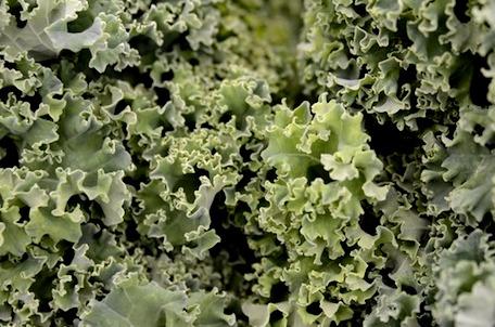 kale  close up