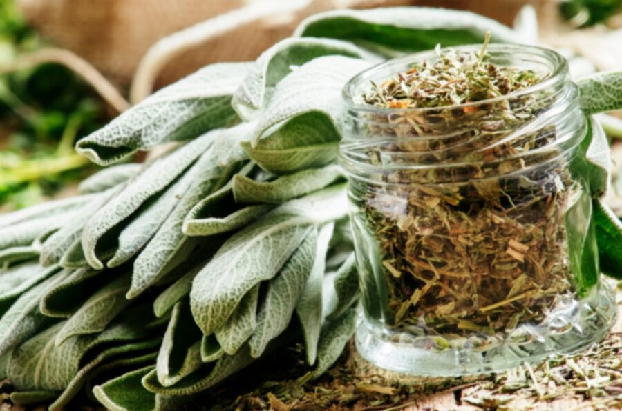 Photo of Sage Helps Our Memory and Much More Proven by Research