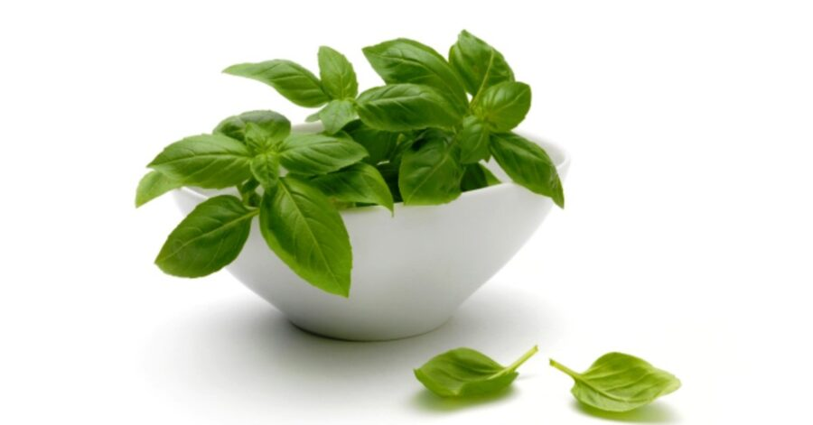 Photo of Basil, The Oldest Herb Is Full of Health Benefits