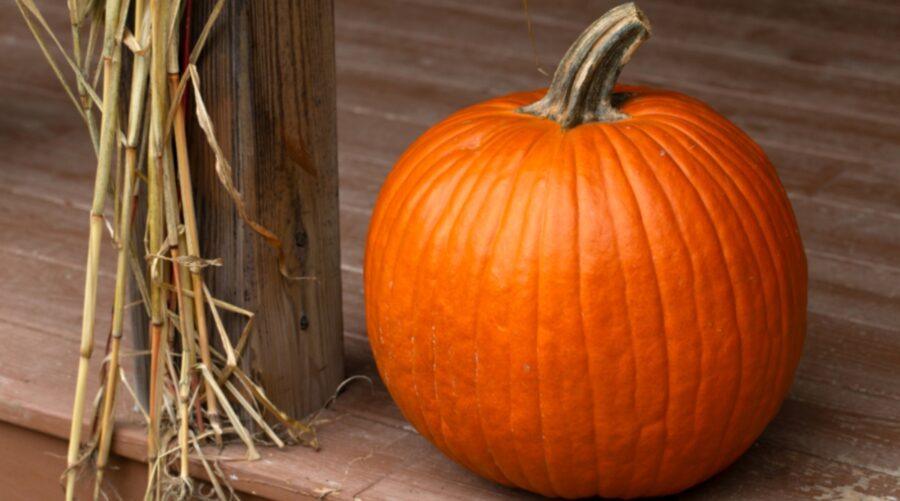 Photo of Pumpkin, Largest Superfood Full of Health Benefits
