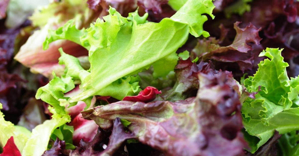 Health Benefits Lettuce Superfood